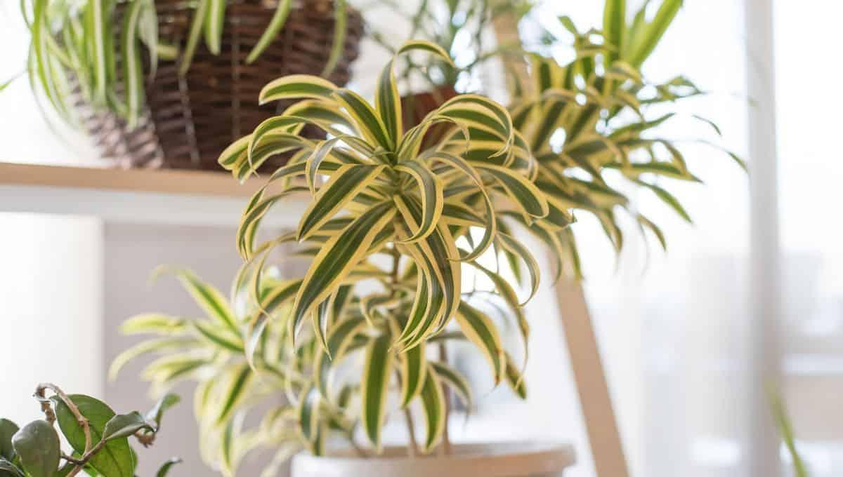 spider plants decor - entirelyeco