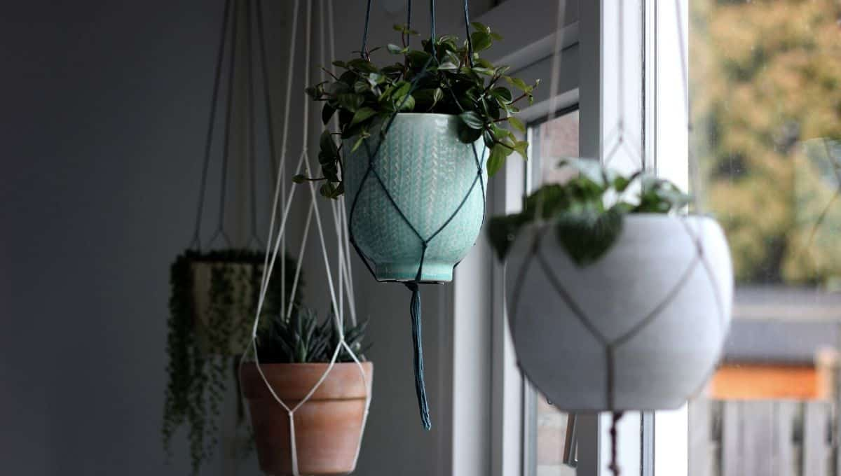 Decorating with hanging plants - EntirelyEco