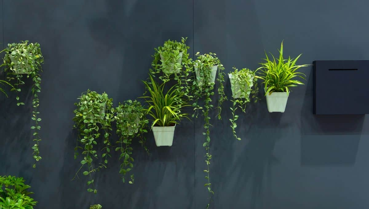 Decorating using wall plants - EntirelyEco