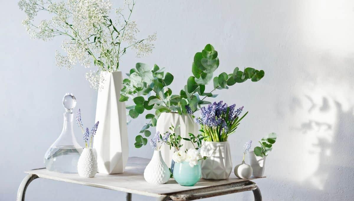 Interior design with plants - EntirelyEco