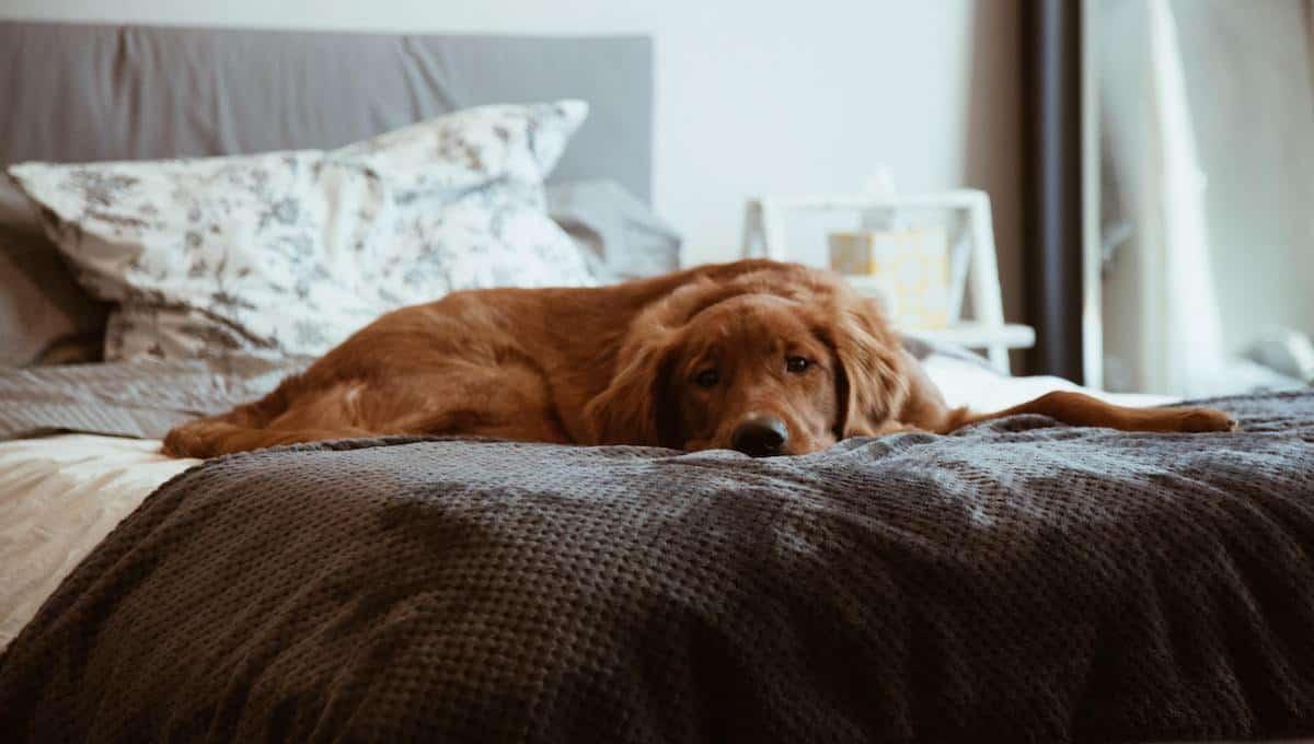 Reduce Pet Indoor Allergens